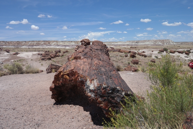 Petrified log and Painted Desert. Photo by Aaron J. Wolf